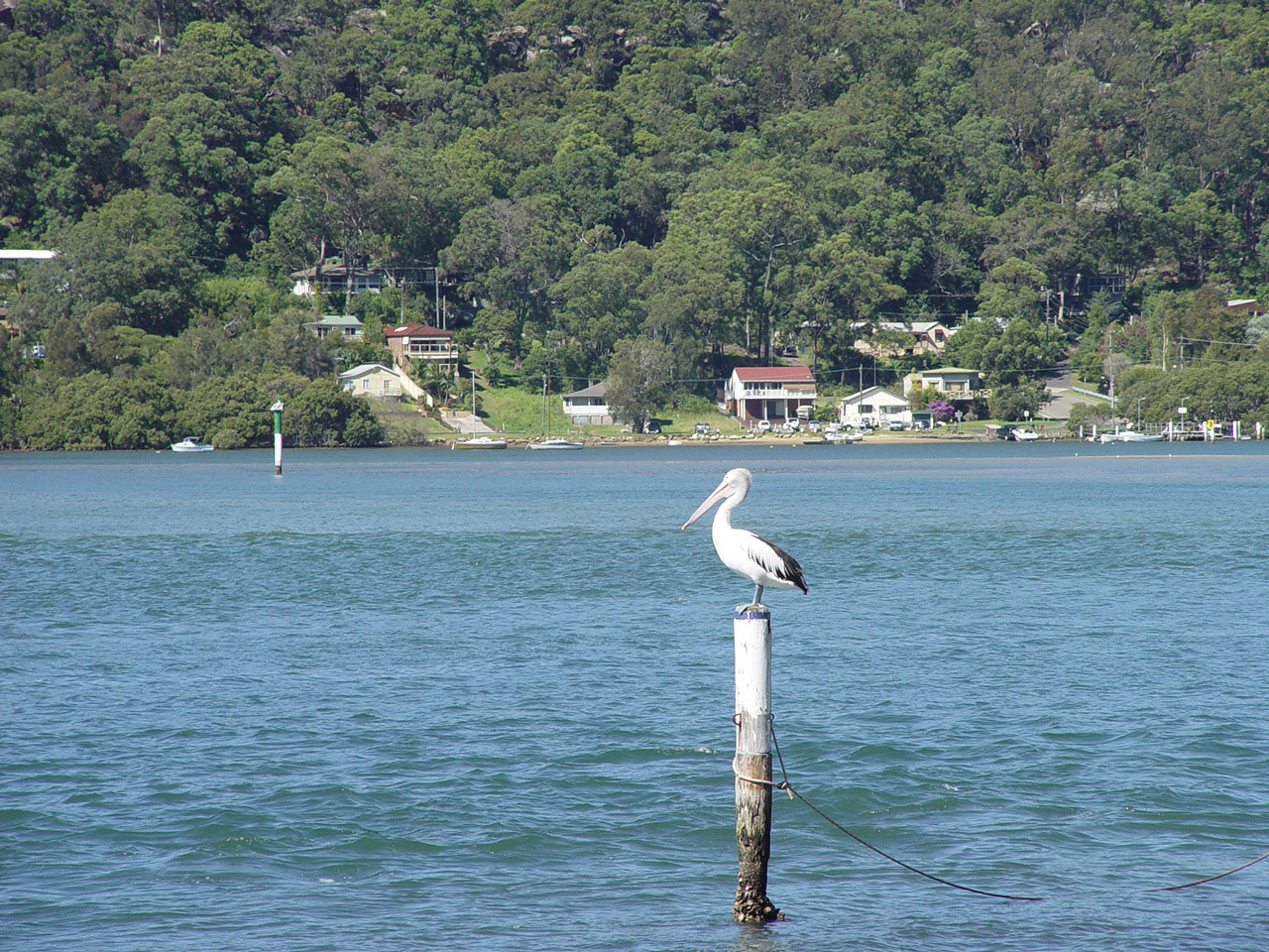 Central Coast Australia  city photos : Wagstaffe Central Coast Australia