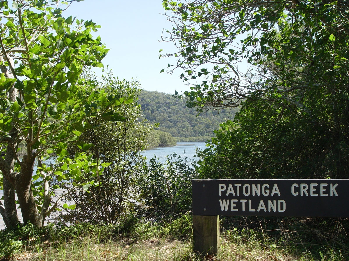 Patonga Creek Wetland