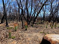 Moving Beyond Bushfire Trauma