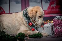 Keep Your Pets Happy this Holiday Season by Keeping Them Away from Festive Foods
